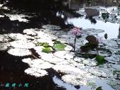 荷花蓮花:20000108_191941.jpg