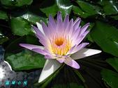 荷花蓮花:IMG_3625