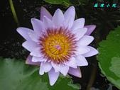 荷花蓮花:IMG_8069