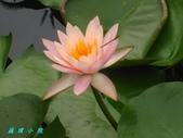 荷花蓮花:IMG_6063.JPG