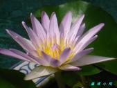 荷花蓮花:IMG_9477.JPG