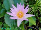 荷花蓮花:20200910_173045.jpg