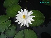 荷花蓮花:IMG_3791