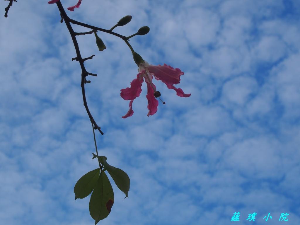 花草樹木2:PC031694.jpg