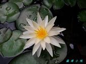 荷花蓮花:20130610_093451.jpg