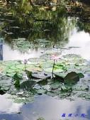 荷花蓮花:20000108_191845.jpg