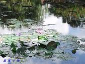 荷花蓮花:20000108_191857.jpg