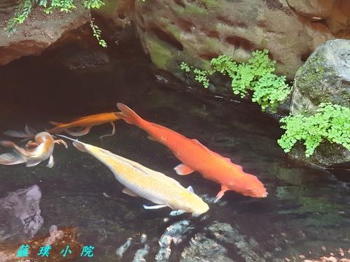 20210215_094548.jpg - 魚蟲鳥獸