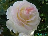 玫瑰薔薇:IMG_0437