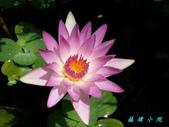 荷花蓮花:20160817_122143.jpg