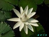荷花蓮花:20130619_084638.jpg