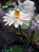 荷花蓮花:20131023_092428.jpg