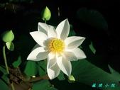 荷花蓮花:20000105_140427.jpg