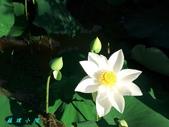 荷花蓮花:20000105_140500.jpg