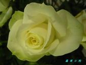 玫瑰薔薇:IMG_5811.jpg