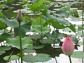 荷花蓮花:IMG_4112.jpg