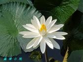 荷花蓮花:20200625_071452.jpg