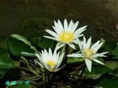 荷花蓮花:20160715_101614.jpg