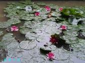 荷花蓮花:20000103_233226.jpg