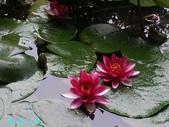 荷花蓮花:20000103_233237.jpg