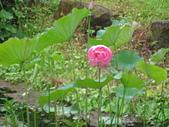 荷花蓮花:照片 036.jpg
