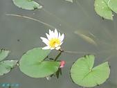 荷花蓮花:IMG_6223.jpg