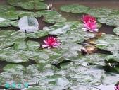 荷花蓮花:20000103_233311.jpg