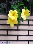 花草樹木2:20000105_112945.jpg