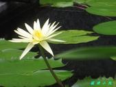 荷花蓮花:IMG_9135.JPG