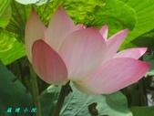 荷花蓮花:IMG_6256.JPG