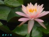 荷花蓮花:IMG_6065.JPG