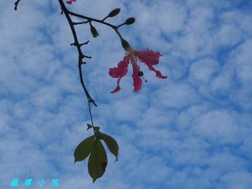PC031693.jpg - 花草樹木2