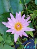 荷花蓮花:20200910_173049.jpg