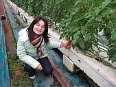 20080211_關西仙草_新埔蕃茄:1499.jpg