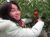20080211_關西仙草_新埔蕃茄:1502.jpg