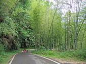 1030525 嘉義瑞里綠色隧道:DSCN9831.JPG