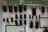 成功高中「蝴蝶宮.昆蟲科學博物館」:20100128蝴蝶宮昆蟲館(林柏昌攝)012.JPG