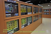 成功高中「蝴蝶宮.昆蟲科學博物館」:20100128蝴蝶宮昆蟲館(林柏昌攝)031.JPG