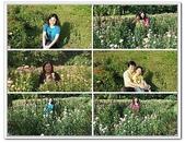 大屯花卉農場:3.jpg