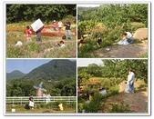 大屯花卉農場:7.jpg