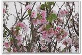 陽明山花季:IMG_5445.JPG