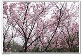 陽明山花季:IMG_5563.JPG