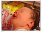 小牛寶寶:DSC00116.JPG