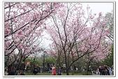 陽明山花季:IMG_5568.JPG