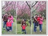 陽明山花季:p6.jpg