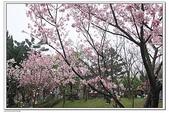 陽明山花季:IMG_5569.JPG
