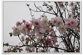 陽明山花季:IMG_5444.JPG