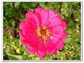 大屯花卉農場:DSC08770.JPG