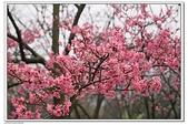 陽明山花季:IMG_5459.JPG