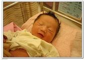 小牛寶寶:DSC00109.jpg